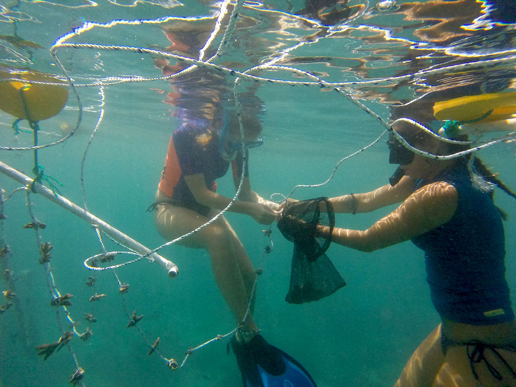 Scuba divers working on coral reef restoration
