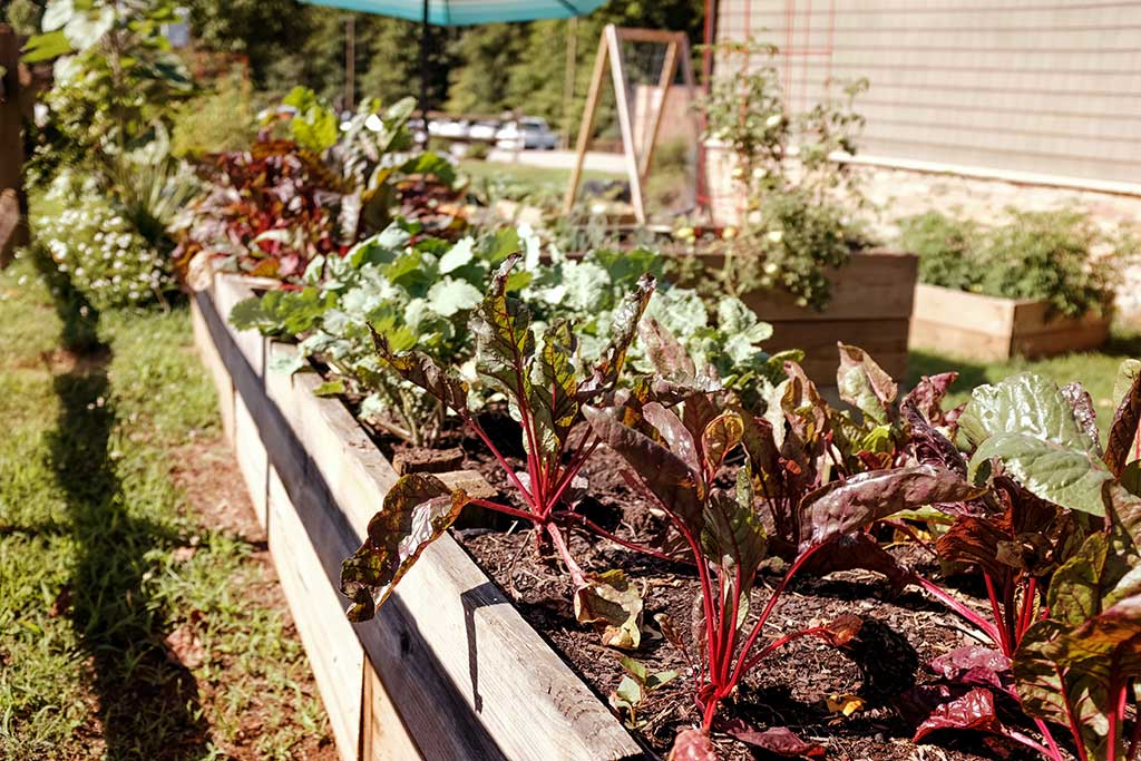 055 Vegetable Patch
