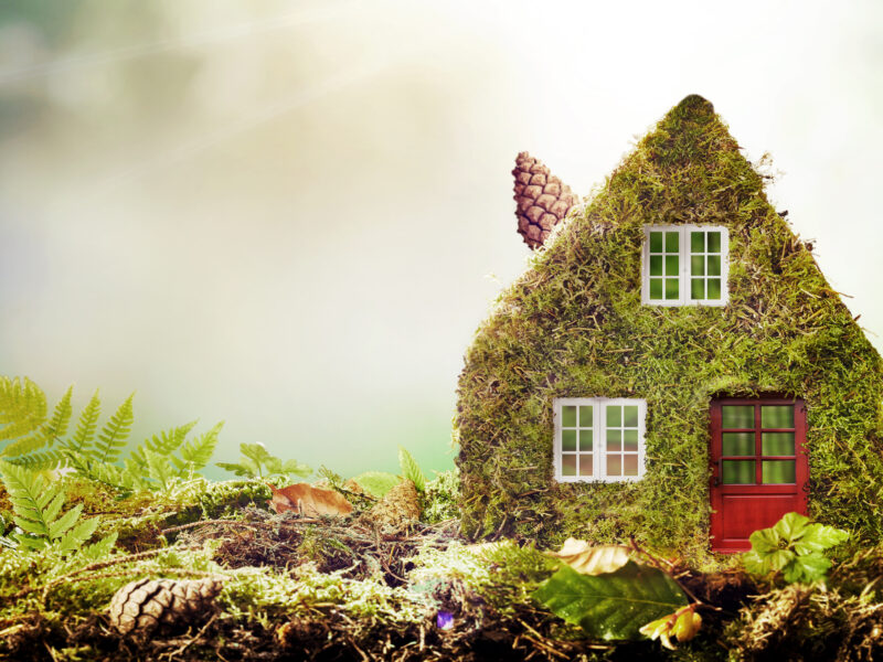 Green house made of moss
