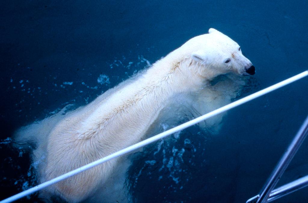 4 polar bear