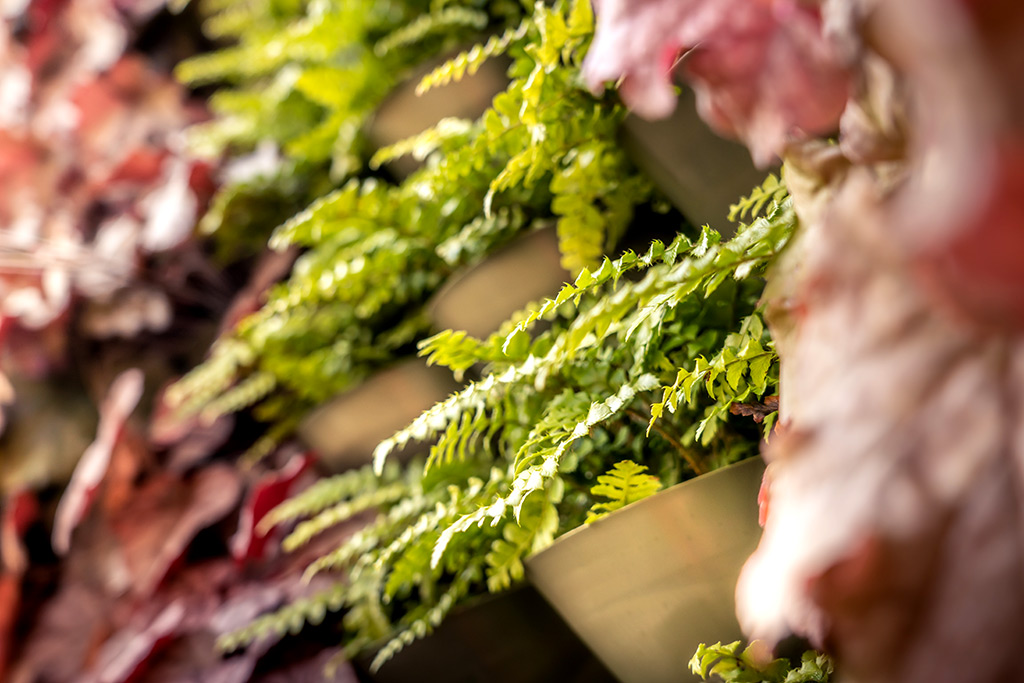 the living wall contains more than 2,600 plants and includes 28 species of ferns, grasses and evergreens