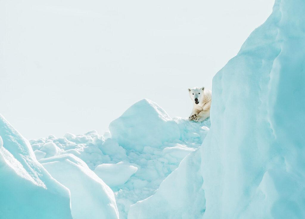 A polar bear resting on an iceberg