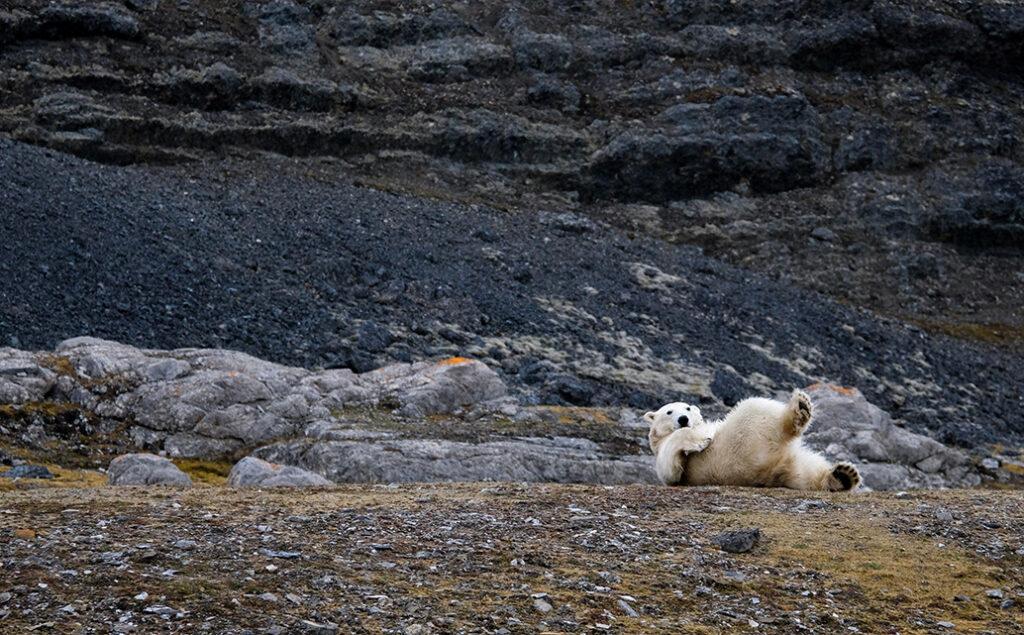 Volta Polar Bear Land