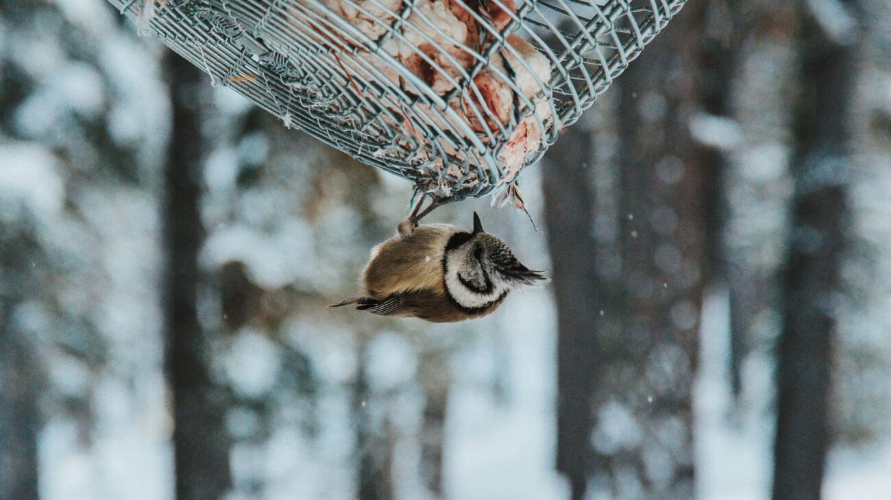 Volta BirdFeeder Feature