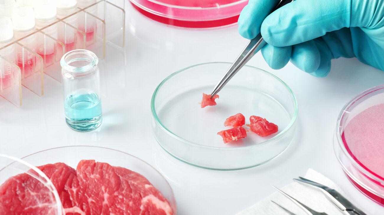 Volta Lab Grown Meat