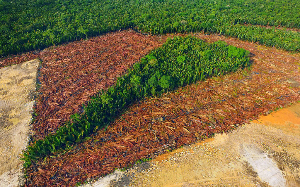 Deforestation of Nipa tropical mangrove swamp forest of Borneo