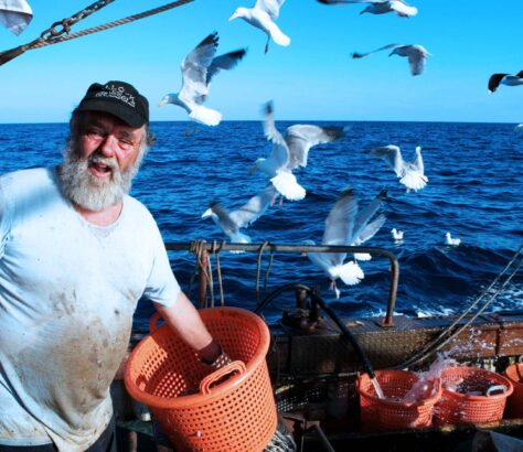 A Newlyn fisherman, at sea, cleaning freshly caught fish aboard his boat surrounded by seagulls.