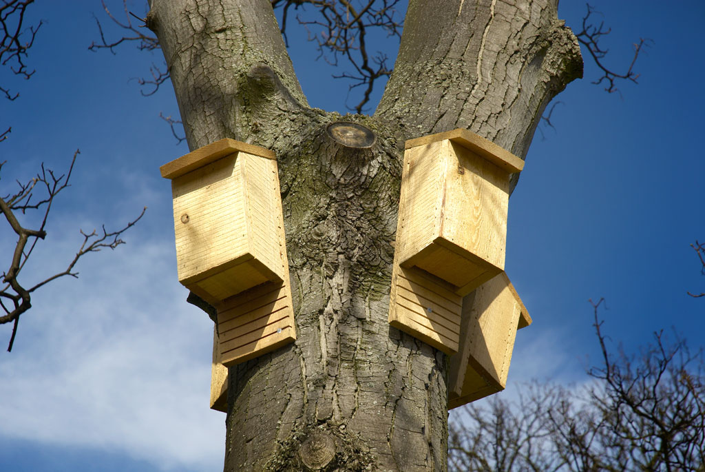 Bat boxes secured to tree in British conservation area. Photo by Jerome Whittingham