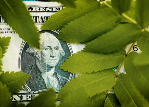Dollar Bill amongst leaves