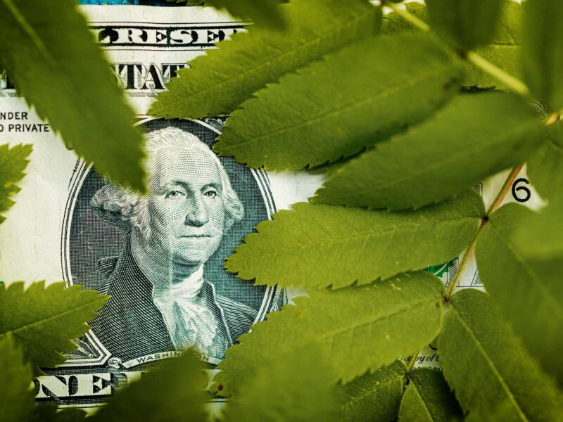 Dollar Bill amongst leaves