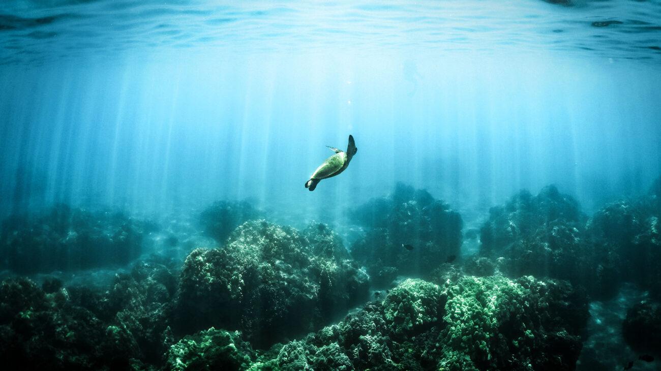 Turtle in a vast ocean