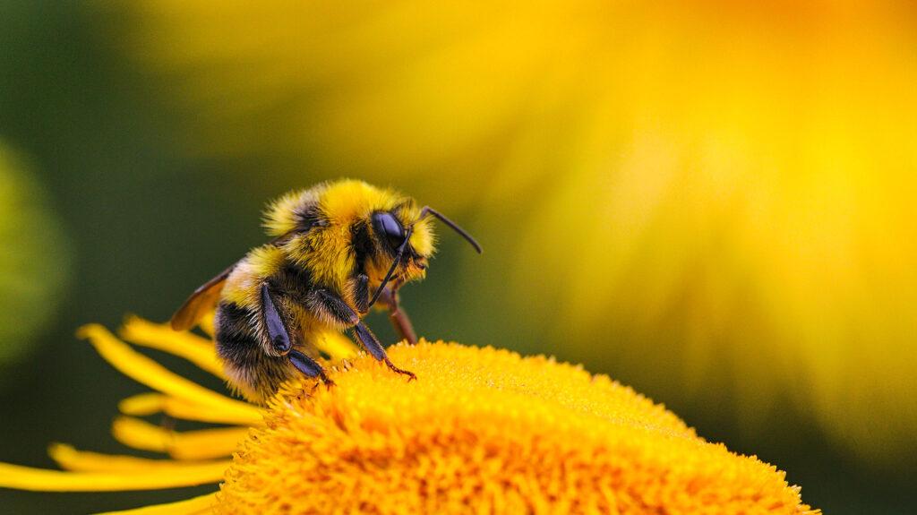 Volta Bees