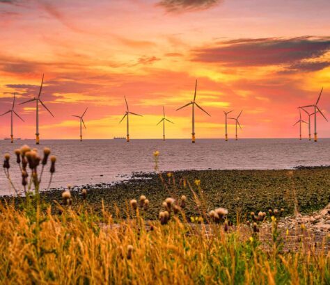 A wind farm off the coast of the UK